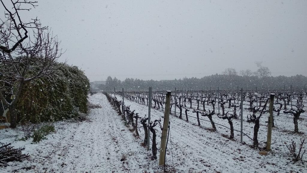 Nieve en bodega de Requena Pago de Tharsys